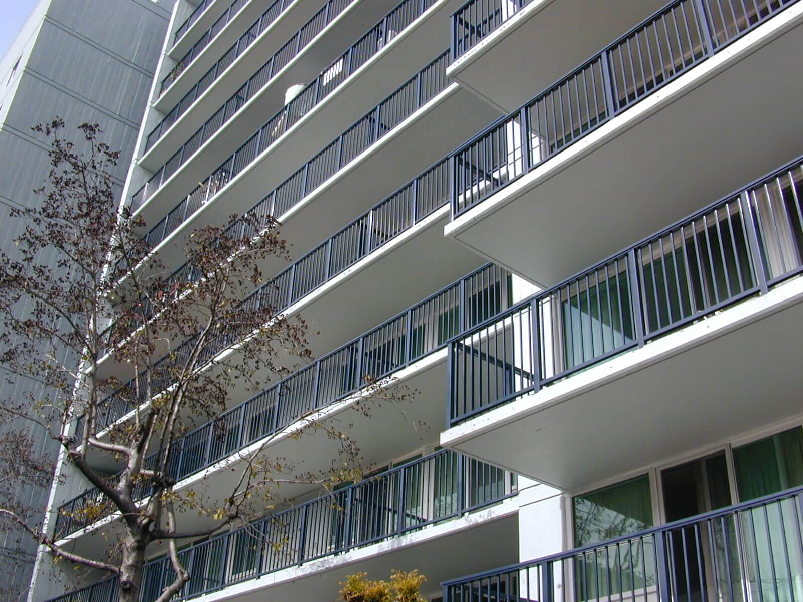 Steel tube railing on Rose of Sharon balconies in Oakland, California