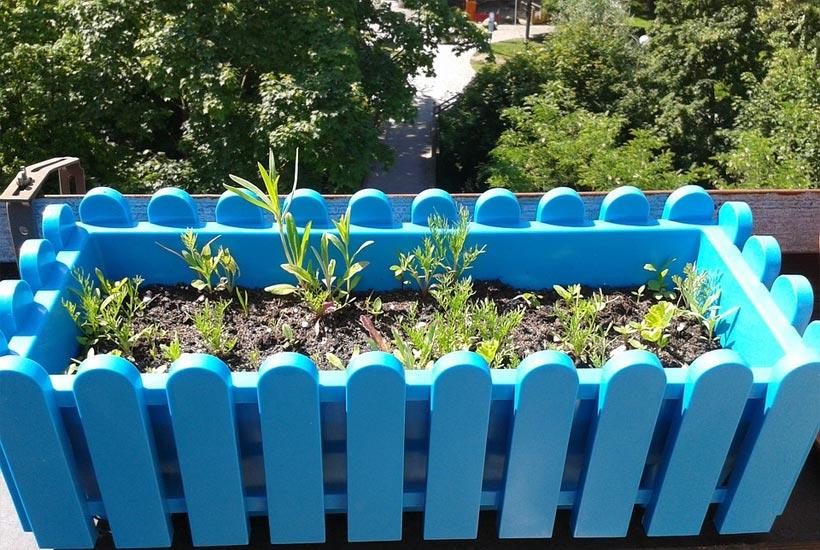 growing herbs on a windy balcony