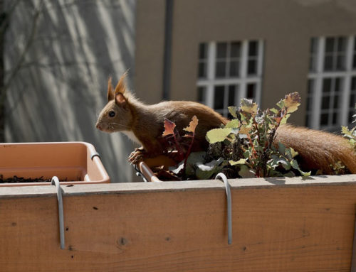 How to Keep Squirrels Off Your Balcony